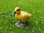 Duckling with Legs - DEC-DUCKL-02