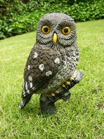 Little Owl - DEC-LITOW-01