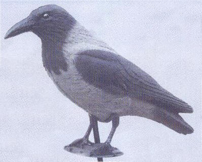 Hooded Crow - DEC-HOOCR-01