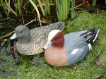 Wigeon - DEC-WIGEO-05 and 06